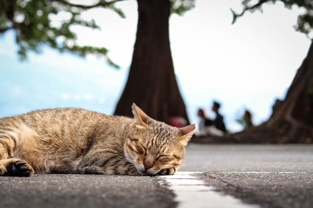 愛睡覺的貓